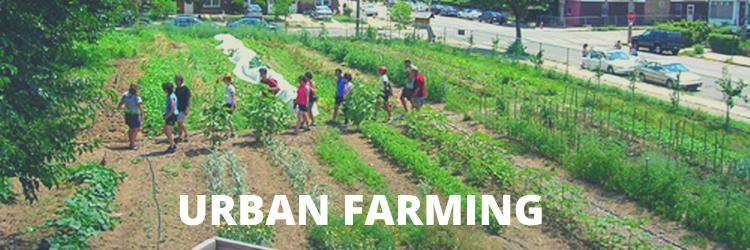 kebun, tanaman, perkotaan, kota, urban, farming, urban farming