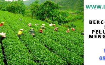bercocok tanam, bertani, petani, indonesia, sawah, lahan, tani