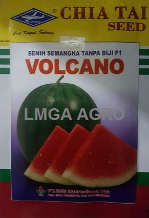 Benih Semangka Non Biji, Benih semangka volcano, Jual benih semangka Volcano, Semangka Volcano Murah, LMGA AGRO