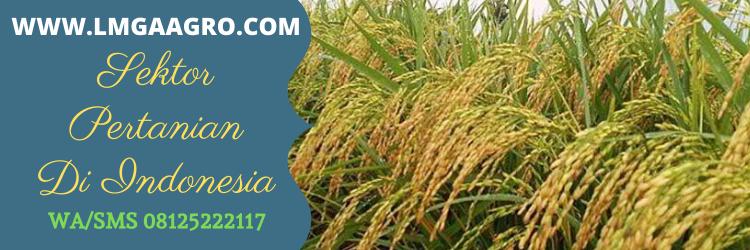 sektor, pertanian, indonesia, bibit, benih, tanaman, sayur, sayur sayuran, buah buahan