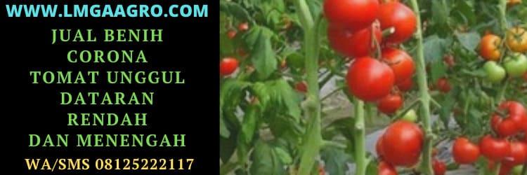 Jual Benih Corona Tomat Murah Unggul Dataran Rendah dan Menengah
