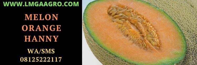 melon, orange, melon orange, rock, rock melon , rock melon hanny f1