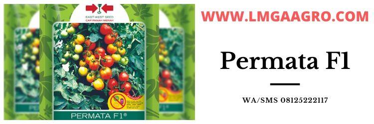 f1, permata, buah tomat permata, buah tomat permata hibrida, panah merah, cap panah merah, eastwestseed, east west