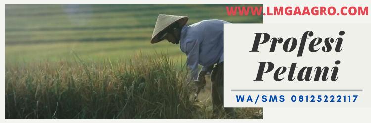 profesi, petani, indonesia, lmga agro, bertani, bercocok tanam