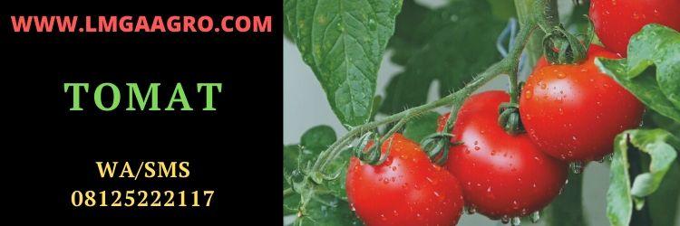 tomato, tomat, tomat buah, tomat sayur, jual