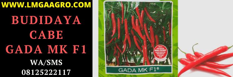budidaya, cabai merah, cabe merah, gada mk f1, cabe hibrida gada mk, cabai hibrida gada mk