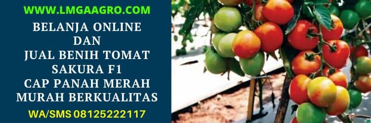 belanja, online, belanja online, jual benih tomat, panah merah, cap panah merah, murah, harga murah, berkualitas
