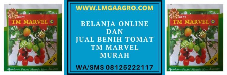 belanja, online, belanja online, murah, benih tomat tm marvel
