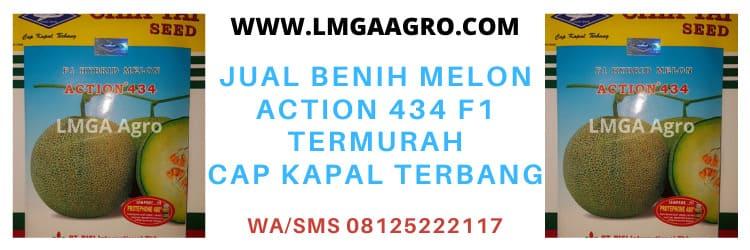 Jual Benih Melon Action 434 Termurah Cap Kapal Terbang