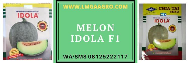 melon, idola, f1, idola f1, f1 idola, hibrida