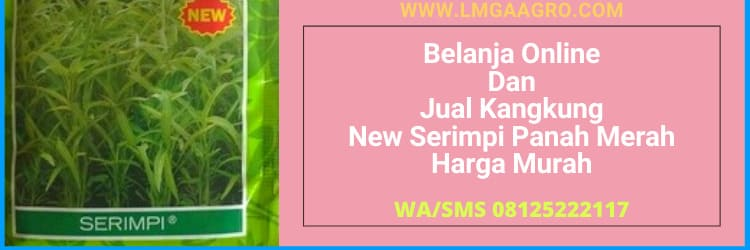 belanja, online, belanja online, lmga agro, lmga, harga murah, jual, kangkung, new serimpi, panah merah