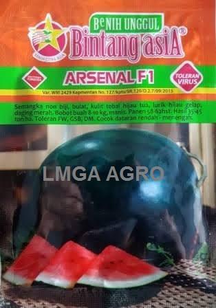 Benih Semangka Non Biji, Benih Semangka Arsenal F1, Jual benih Semangka Arsenal, Semangka Arsenal Murah, Semangka Non Biji Aresenal, Semangka Arsenal Terbaru, Lmga Agro