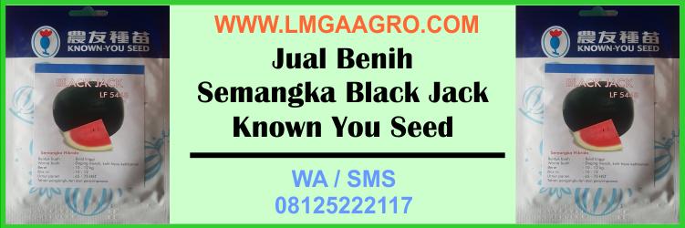 Jual Benih Semangka Black Jack Known You Seed Harga Murah