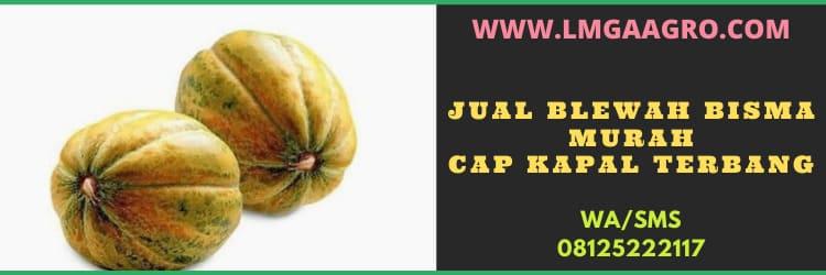 jual, blewah, buah, buah buahan, blewah bisma, jual blewah bisma murah, toko pertanian, toko online, harga murah, diskon, promo