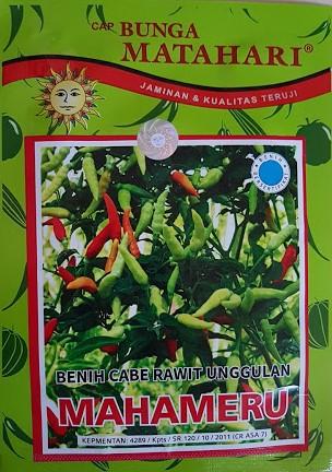 cabe mahameru,benih cabe,cabe rawit,bunga matahari,budidaya cabe rawit,budidaya cabe,lmga agro