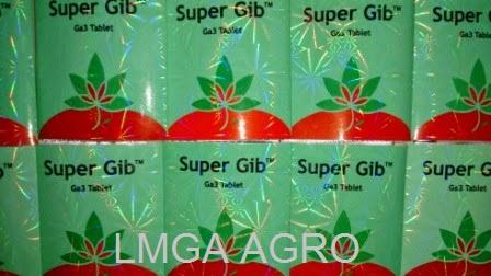 super gibb tablet, zpt, hormon tumbuh
