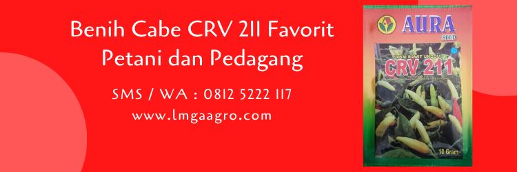 Benih Cabe CRV 211 Favorit Petani dan Pedagang