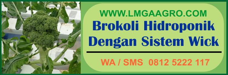 brokoli, hidroponik, sistem, wick
