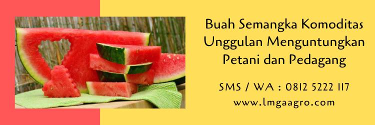 semangka,buah semangka,budidaya semangka,semangka kuning,semangka merah,pertanian,lmga agro
