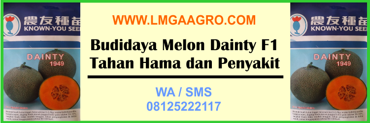 Budidaya Melon Dainty F1 Tahan Hama dan Penyakit