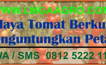 Budidaya tomat, Cara menanam tomat, Tanaman tomat, Jual benih tomat