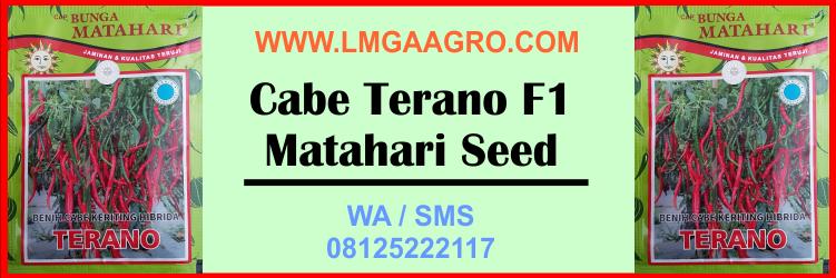 Cabe, Terano F1, Matahari Seed