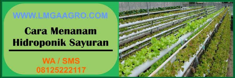 cara, menanam, hidroponik, sayuran