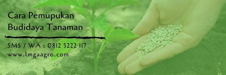pemupukan,budidaya tanaman,pupuk,pupuk organik,pupuk kimia,pertanian,jenis pupuk,jual pupuk,rabuk,lmga agro