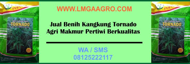 Jual, Benih, Kangkung, Tornado, Agri, Makmur, Pertiwi, Berkualitas