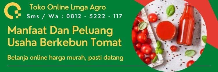 Cara menanam tomat, Manfaat tomat, Jual Benih Tomat, Beli Benih Tomat , Usaha berkebun tomat