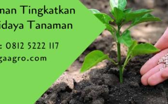 nutrisi tanaman,budidaya tanaman,pertanian,petani,benih tanaman,bibit tanaman,lmga agro,usaha pertanian,pupuk pertanian,pupuk