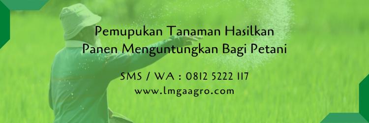 pemupukan,pertanian,budidaya tanaman,pupuk,pupuk organik,pupuk kimia,toko pertanian,lmga agro