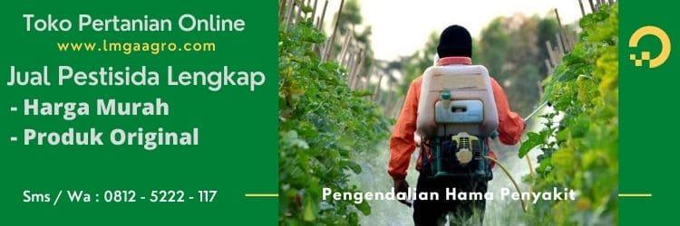 Cara Menanam Tomat, Pengendalan Hama Penyakit, Tanam Tomat, Jual Benih Tomat, Lmga Agro