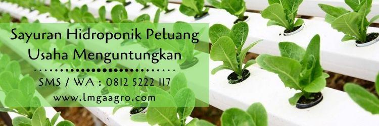 sayuran,hidroponik,nutrisi tanaman,peluang usaha,usaha pertanian,pupuk,pupuk pertanian,lmga agro