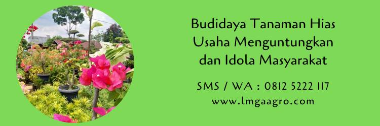 Budidaya Tanaman Hias Usaha Menguntungkan dan Idola Masyarakat