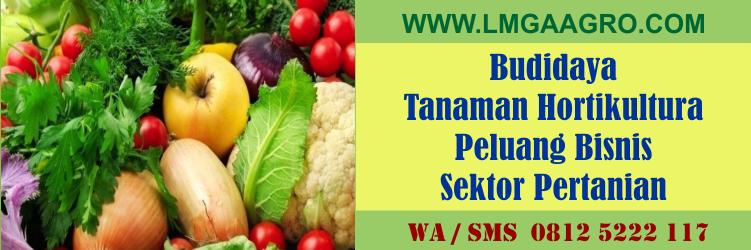 Budidaya Tanaman Hortikultura Peluang Bisnis Sektor Pertanian