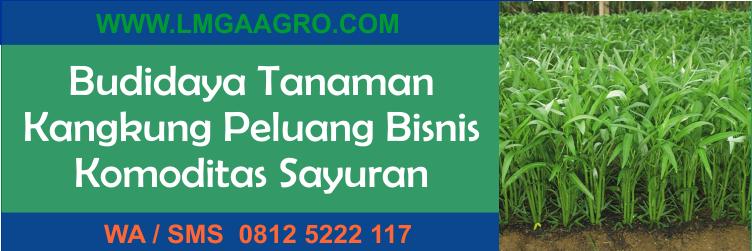 Budidaya Tanaman Kangkung Peluang Bisnis Komoditas Sayuran