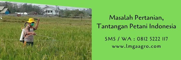 pertanian,budidaya tanaman,hama,hama tanaman,petani,lmga agro