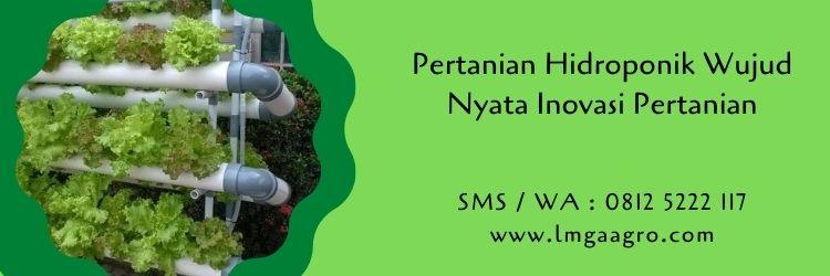 pertanian,hidroponik,budidaya tanaman,sayuran hidroponik,petani,benih tanaman,lmga agro