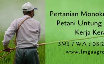 pertanian,pertanian monokultur,budidaya tanaman,petani,peluang usaha,lmga agro