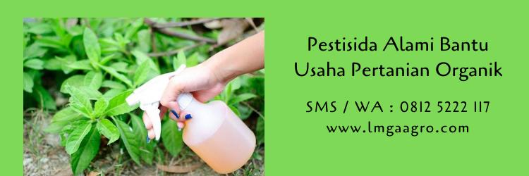 Pestisida Alami Bantu Usaha Pertanian Organik
