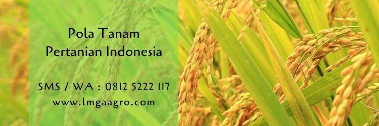 pola tanam,pertanian,pertanian monokultur,polikultur,tumpang sari,budidaya tanaman,benih tanaman,petani,lmga agro