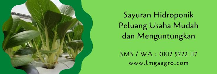 sayuran hidroponik,hidroponik,budidaya tanaman,pertanian,budidaya hidroponik,petani,hobi,lmga agro