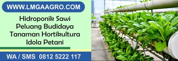 Hidroponik, sawi, peluang, budidaya, tanaman, hortikultura, idola, petani