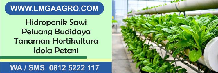 Hidroponik Sawi Peluang Budidaya Tanaman Hortikultura Idola Petani