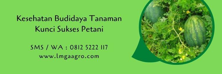 budidaya tanaman,tanaman sehat,pertanian,usaha pertanian,pestisida,petani,lmga agro