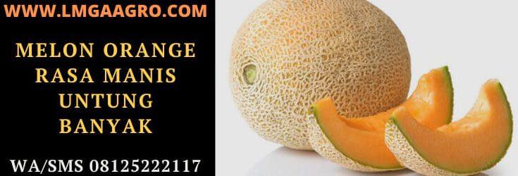 melon, orange, buah, tanaman, tanaman buah