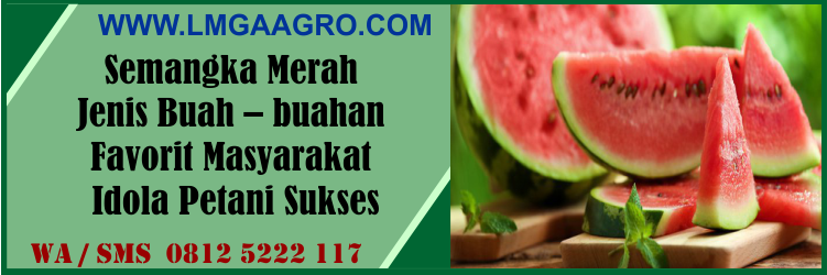 semangka, merah, jenis, buah - buahan, favorit, masyarakat, idola, petani, sukses