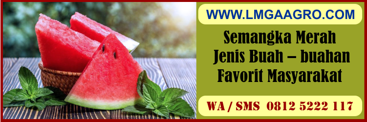 semangka, merah, jenis, buah - buahan, favorit, masyarakat