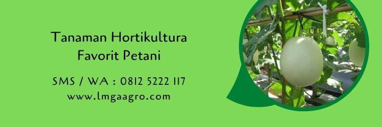 tanaman hortikultura,budidaya tanaman,hortikultura,pertanian,tanaman sehat,lmga agro